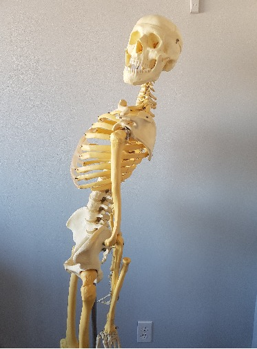 skeleton leaning backwards with hypermobility, needs the best oakville physiotherapy clinic