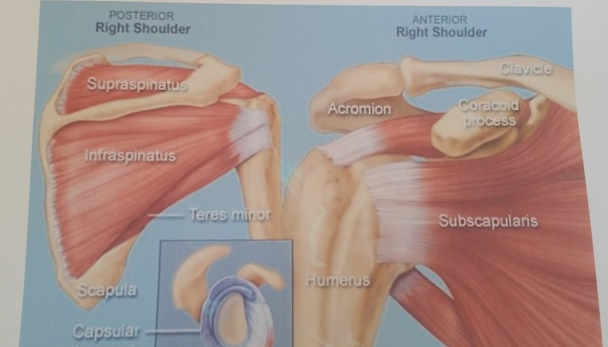 Oakville Physiotherapy rotator cuff pain treatment