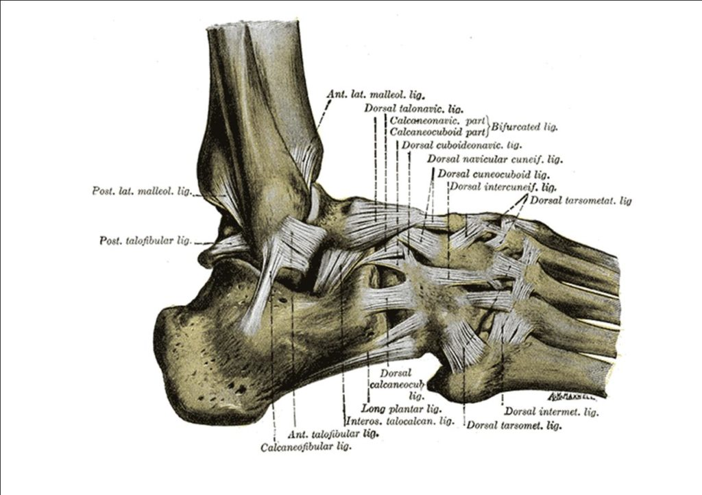 oakville physio ankle sprain ligaments