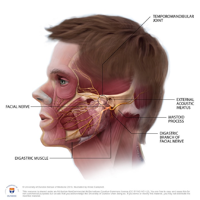 physiotherapy oakville tmj treatment
